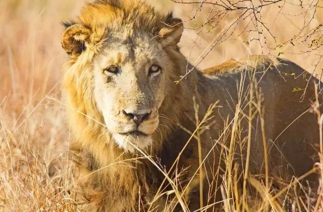 南非,去南非一次收齐Big Five 你需要这份观赏指南