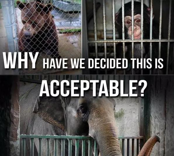 """动物,请不要在动物园""""为所欲为"""""""