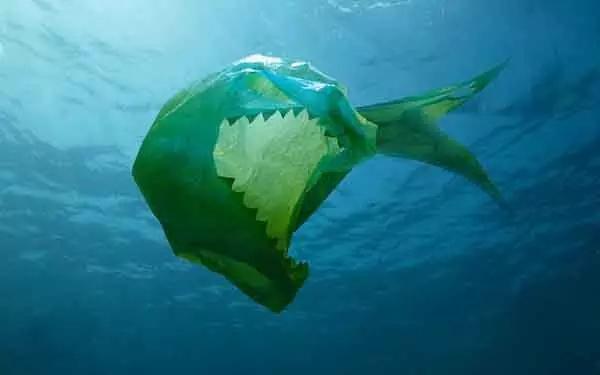我为海洋发声:缺失敬畏最让人恐惧!