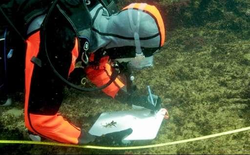 一座名为式根岛的海水中 或存在挽救珊瑚礁的线索