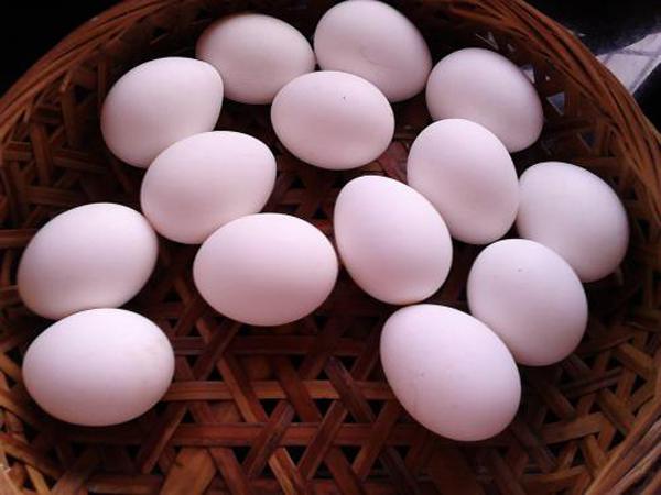 一天到底吃几个鸡蛋好  关于鸡蛋的问题可能都在这里了