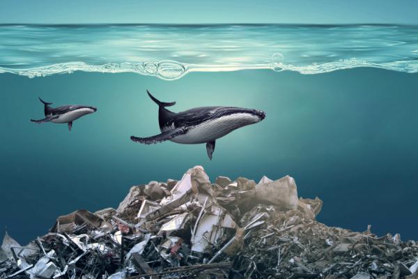 """《国家地理》六月刊封面获得赞赏 海洋塑料污染只是""""冰山一角"""""""